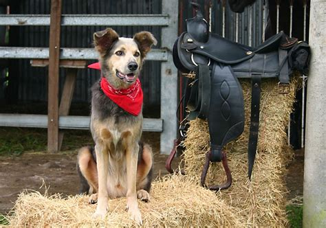 20 Adorable Male and Female Farm Dog Names - DogVills